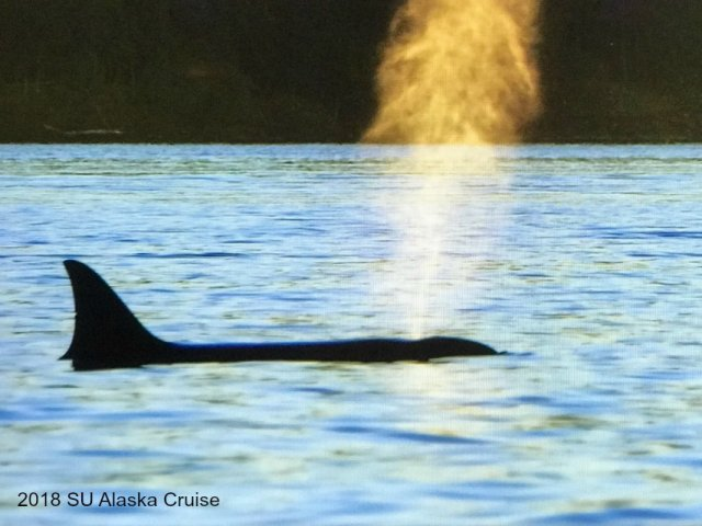 whale watching, alaska whale watching, su incentive trip, 2018 su incentive trip, Share alaska travels