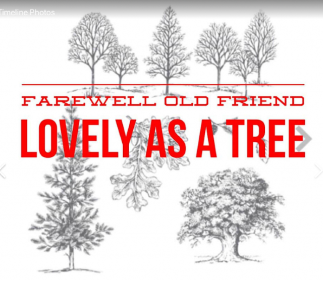 Lovely as A Tree Farewell, greeting cards, stamping, Stampin' Up retiring sets, scrapbooking, Best stamp set ever,